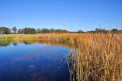 Pantanais de Califórnia Imagem de Stock
