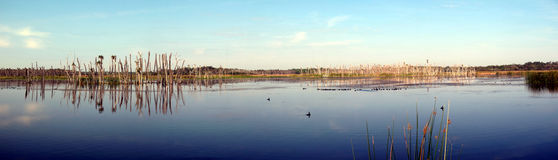 Pantanais Imagens de Stock Royalty Free