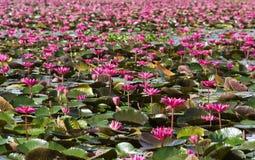 Pantanais de Talay Noi, Phattalung Imagem de Stock Royalty Free