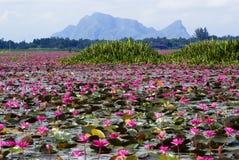 Pantanais de Talay Noi, Phattalung Imagem de Stock