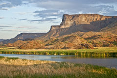 Pantanais do deserto Imagem de Stock