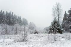 Pantanais do inverno Fotos de Stock Royalty Free