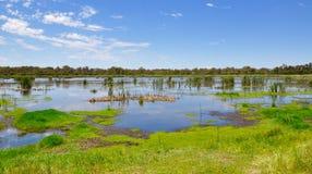 Pantanais do lago Bibra, Austrália Ocidental Imagem de Stock