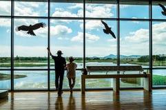 Pantanais e janela Imagem de Stock
