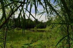 Pantanais naturais em Missouri imagens de stock