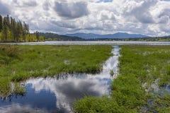 Pantanais por um lago foto de stock