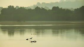 Pantanais que dão a vida a muitos povos em torno da área do pântano imagem de stock