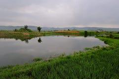 Pantanal Imagem de Stock