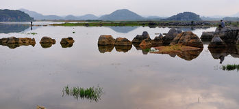 Pantanal Imagens de Stock