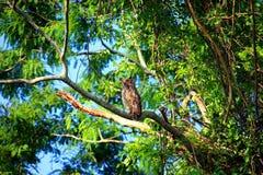 Pantanal Royalty Free Stock Image