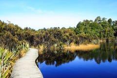Pantanal Imagem de Stock Royalty Free