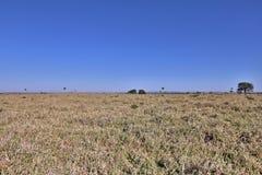 Pantanal Stockfoto