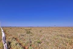 Pantanal Lizenzfreies Stockfoto