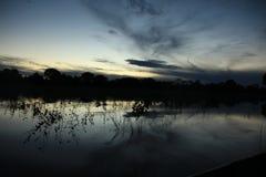 Pantanal Foto de Stock Royalty Free