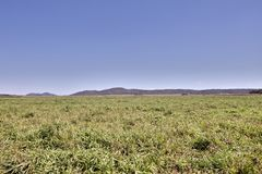 Pantanal Brasile Immagini Stock Libere da Diritti