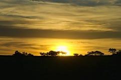 Pantanal - Brasilien Arkivfoton