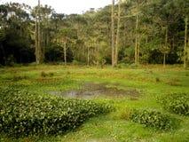 Pantanal Brazil Swamp. Beautiful swamp marsh pond in Pantanal, Brazil Stock Image