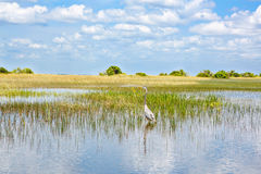 Pantanal de Florida, passeio do Airboat no parque nacional dos marismas nos EUA Foto de Stock Royalty Free