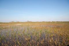 Pantanal de Florida, passeio do Airboat no parque nacional dos marismas nos EUA Lugar popular para turistas Fotos de Stock