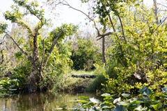 Pantanal de Florida, passeio do Airboat no parque nacional dos marismas nos EUA Lugar popular para turistas Fotografia de Stock