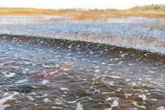 Pantanal de Florida, passeio do Airboat no parque nacional dos marismas nos EUA Lugar popular para turistas Foto de Stock
