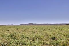 Pantanal el Brasil Imágenes de archivo libres de regalías