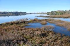 Pantanal/estuário traseiros do louro na praia Califórnia de Newport. Imagem de Stock Royalty Free