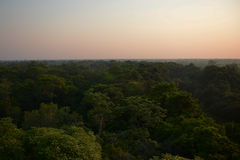 Pantanal forest at dawn. Trees from the height of bird's flight in Pantanal area of  Brazil at dawn Stock Image