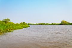Pantanal krajobraz z rzeką wokoło zieleni roślinnością i zdjęcia royalty free