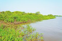 Pantanal krajobraz z rzeką wokoło zieleni roślinnością i fotografia royalty free