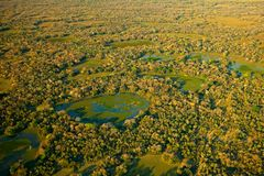 Pantanal landscape, green lakes and small ponds with trees. Aerial view on tropic forest, Pantanal, Brazil. Wildlife nature, tropi royalty free stock photography