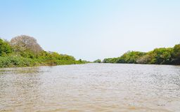 Pantanal landscape with the river and green vegetation on the ri. Ver banks. Beautiful clear blue sky, water of the river and aquatic vegetation above water stock image