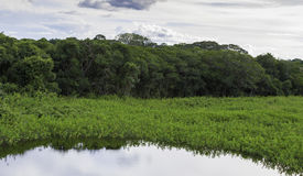 Pantanal in Mato Grosso. The Pantanal is one of the world's largest tropical wetland areas located in Brazil , South America Royalty Free Stock Image