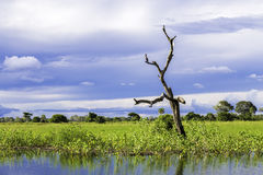 Pantanal in Mato Grosso. The Pantanal is the world's largest tropical wetland areas located in Brazil , South America Royalty Free Stock Photo
