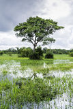 Pantanal in Mato Grosso. The Pantanal is the world's largest tropical wetland areas located in Brazil , South America Royalty Free Stock Image