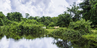 Pantanal in Mato Grosso. The Pantanal is the world's largest tropical wetland areas located in Brazil , South America Royalty Free Stock Photos