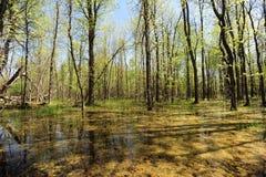 Pantanal na mola Foto de Stock