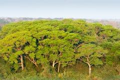 Pantanal våtmark, Brasilien Royaltyfria Bilder