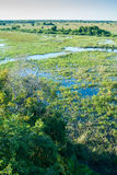 Pantanal våtmark, Brasilien Royaltyfria Foton
