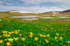Pantani di Accumoli mit Blumen Stockfotos