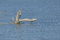 pantano Foto de archivo libre de regalías