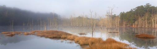 Pantano brumoso Foto de archivo libre de regalías