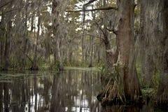 Pantano cerca de New Orleans, Luisiana Fotos de archivo