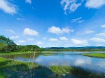 Pantano con el fondo del cielo azul Fotografía de archivo