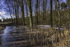Pantano congelado en el parque nacional de Kampinos Fotografía de archivo libre de regalías