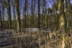 Pantano congelado en el parque nacional de Kampinos Fotos de archivo