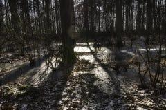 Pantano congelado en el parque nacional de Kampinos Imágenes de archivo libres de regalías