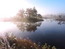 Pantano de Aukstumalos en la niebla de la mañana, Lituania Imagen de archivo