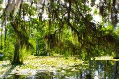 Pantano de Cypress Fotos de archivo libres de regalías