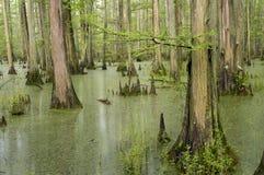 Pantano de Cypress Fotografía de archivo